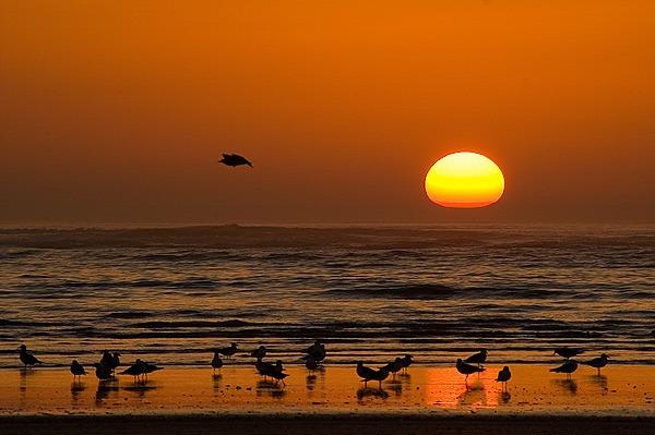 Playa doñana verano camper
