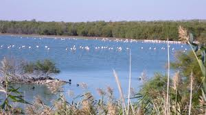 andalusian wetlands - Los Humedales Andaluces