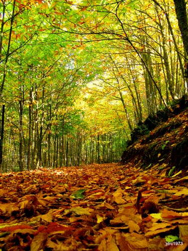 autumn in andalusia a colorful variety to enjoy with your 5 senses on a campervan 2 - El Otoño en Andalucía, un variado colorido para disfrutar con tu Furgoneta Camper.