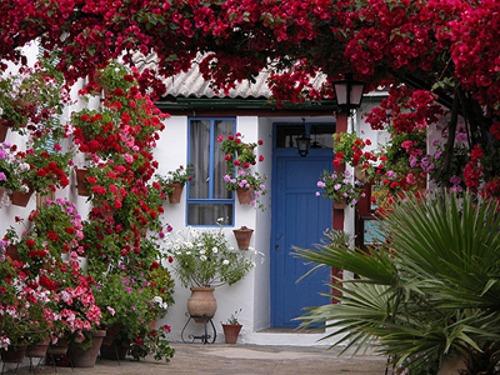 spring in andalusia an explosion of life 2 - Primavera en Andalucía, una explosión de vida.