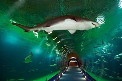 acuario almunecar andalucia en camper - Con niños de aventura por Andalucía en Furgoneta Camper (2ª Parte)