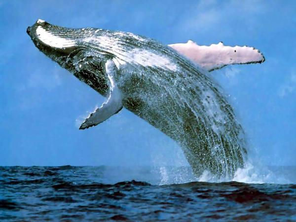 Tarifa en Camper con Niños avistamientos de ballenas