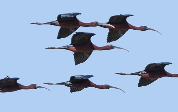 birdwatching3 700x441 - Inicio
